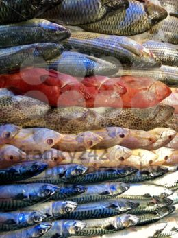 Pile of different fresh fish