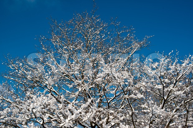 Trees covered with snow against great blue winter sky