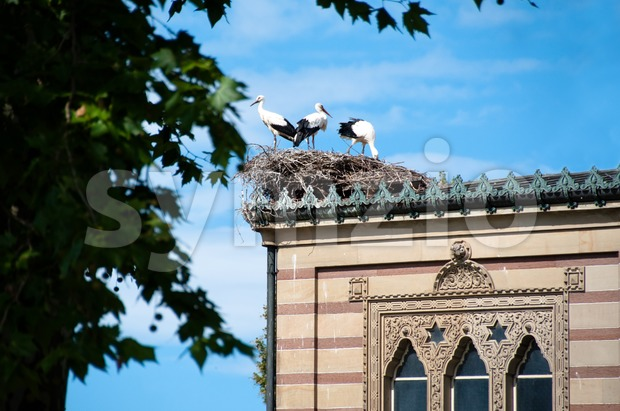 Stork Family Stock Photo