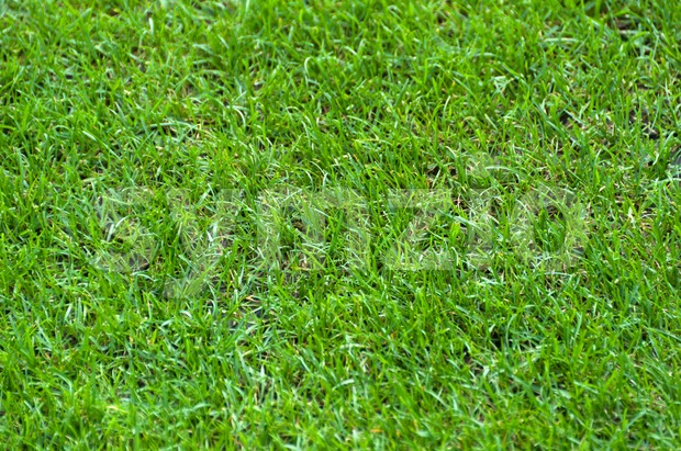 Football Stadium Grass Stock Photo