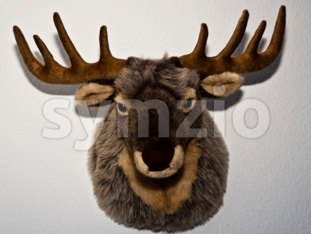 Stuffed Deer Mount Stock Photo