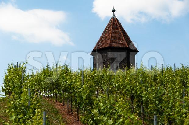 Vineyard with Melac Tower in Obertürkheim Stock Photo