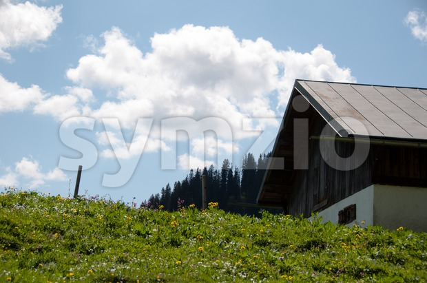 Alpine Pasture Stock Photo