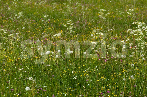 Meadow in mountains Stock Photo