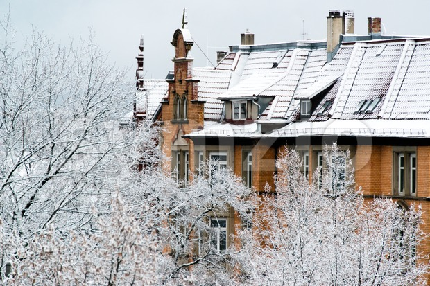 Houses and trees in fresh snow Stock Photo
