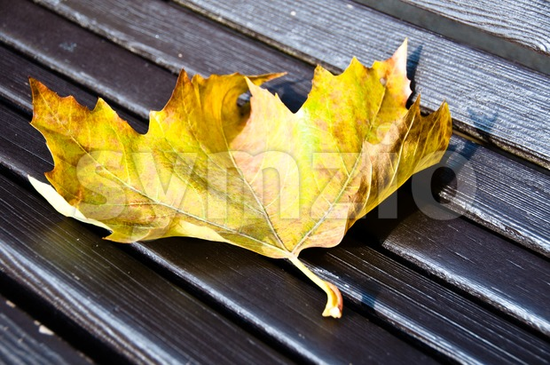 Maple leaf on wooden bench Stock Photo
