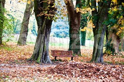 Fall scenery Stock Photo