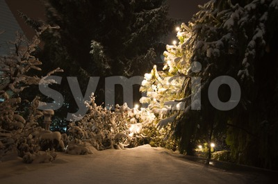 Winter Landscape at night Stock Photo