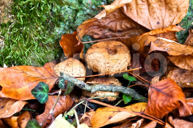 Fall scenery with mushrooms and leaves at a tree trunk