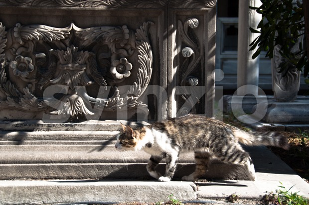 Running Cat in front of Sarcophagus Stock Photo