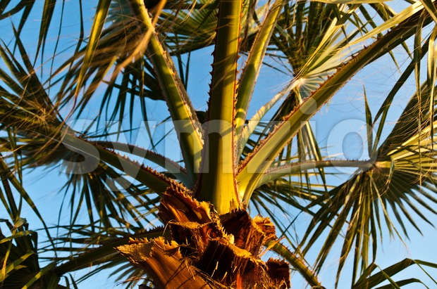 Palm in Sunset Stock Photo