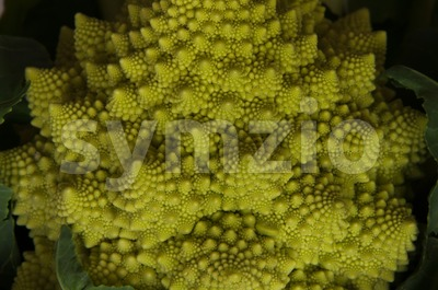 romanesco - italian broccoli Stock Photo