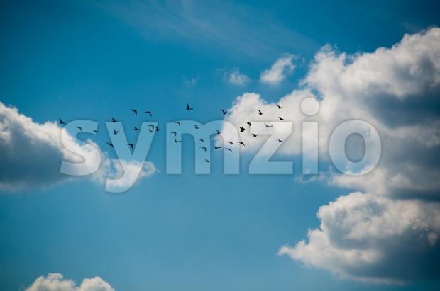 Flock of birds in beautiful cloudy summer sky