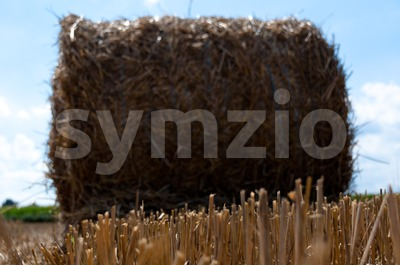 Hay bale on freshly harvested fields Stock Photo