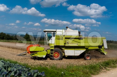 Combine harvesting corn Stock Photo