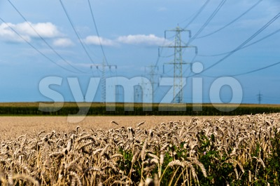 Fields and power poles Stock Photo