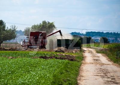 Combine harvesting corn Stock Photo