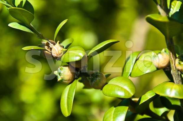 Box twigs with fruits Stock Photo