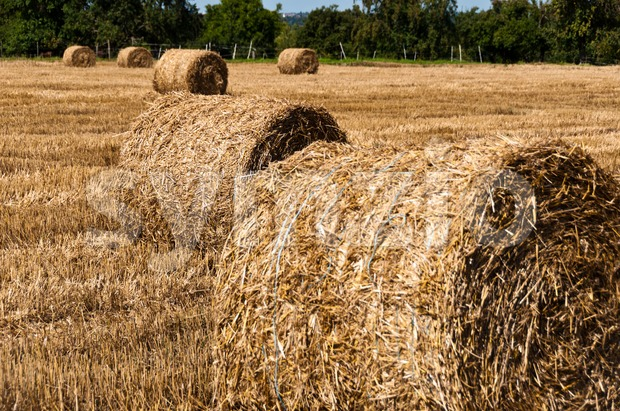 Hay bales on freshly harvested fields Stock Photo