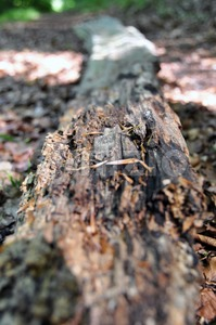 Rotten tree trunk 1 Stock Photo