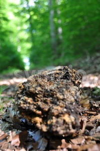 Rotten tree trunk 2 Stock Photo