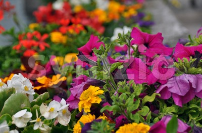 Colourful flower bed Stock Photo