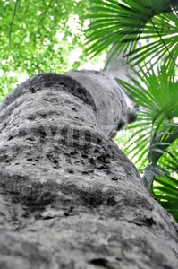 Large palm tree - view from below Stock Photo
