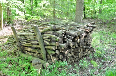 Firewood stack 2 Stock Photo