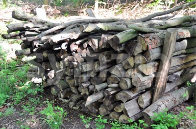 Firewood stack 1 Stock Photo