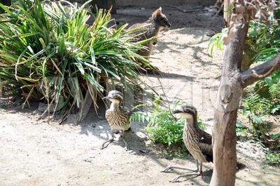 Australian wildlife Stock Photo