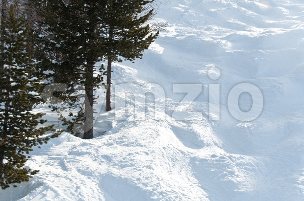 Mogul slope with trees Stock Photo