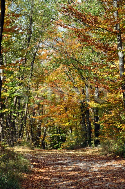 A dirt road winds through autumn colored trees in Croatian forest