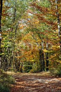 Autumn trees Stock Photo