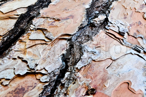 Close-Up of Tree Bark Stock Photo