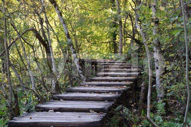 Boardwalk in forest, autumn Stock Photo