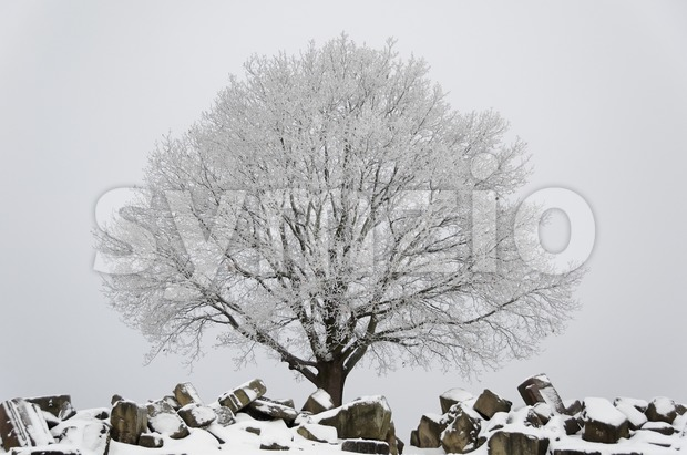 Winter scenario - tree and ruins Stock Photo