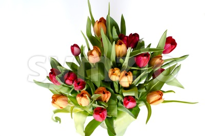 Bouquet of tulips on white - horizontal Stock Photo
