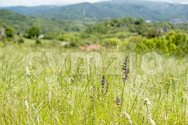 wild meadows in Liguria, Italy Stock Photo
