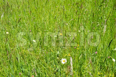 wild meadows Stock Photo