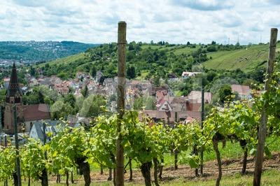 Vineyard in Uhlbach Stock Photo