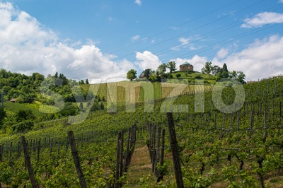 Vineyard and Chapel Stock Photo