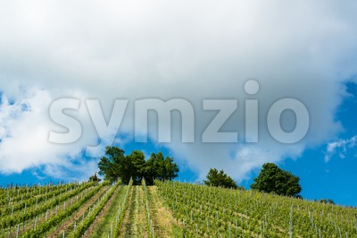Spring Vineyard with great blue sky Stock Photo