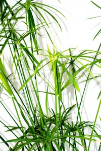 Grass plant leaves background Stock Photo