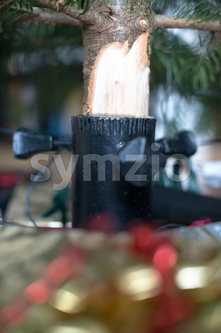 Under the Christmas tree Stock Photo