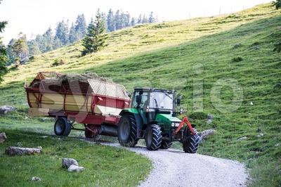 hay harvest Stock Photo