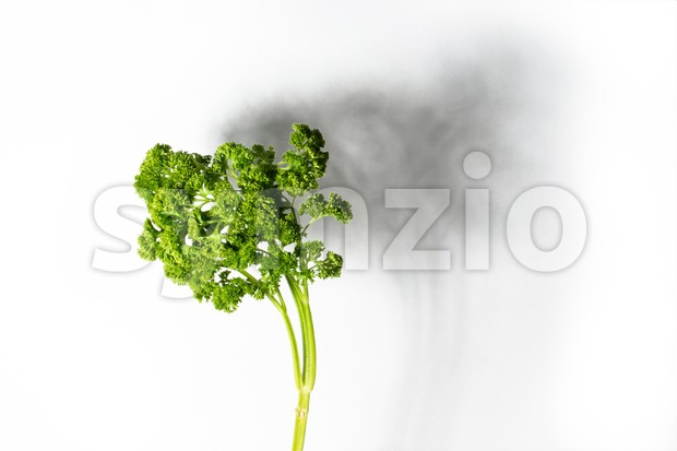 abstract: parsley Stock Photo