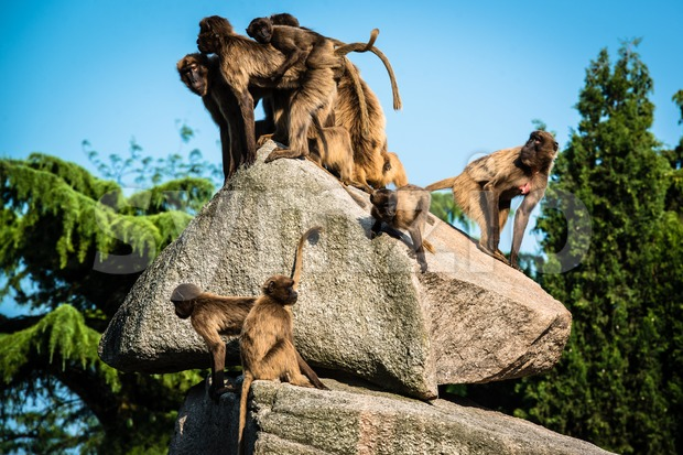 monkeys on a rock Stock Photo