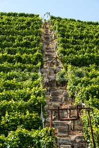 Vineyards in Stuttgart with lift Stock Photo