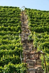 Vineyards in Stuttgart with lift Stock Photo