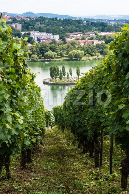 Vineyards in Stuttart - Bad Cannstatt: Very steep hills along river Neckar with the Max-Eyth See (lake) in the background